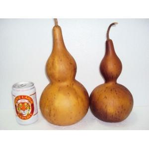 Set 2 Big Wine gourd Dried Planted by Vietnamese Farmer-Unopened Unpainted